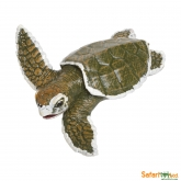 Kemps Ridley Sea Turtle Baby