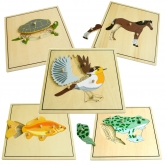 Set of 5 Animal Skeleton Puzzles
