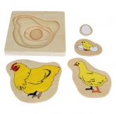 Puzzle: Development of Chicken